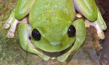 tree-frog-steve-richards.jpg
