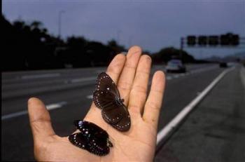 butterfly-crossing.jpg
