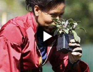 michelle obama plants in WH garden