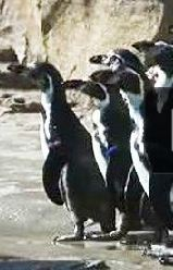 penguins-new-habitat.jpg
