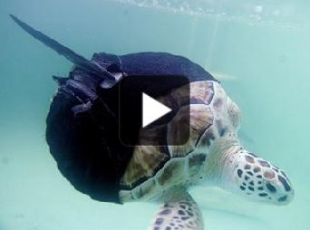 turtle-wetsuit-with-fin.jpg
