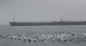 dolphin-force-field.jpg