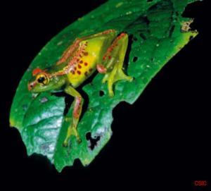 frog-madagascar-new.jpg