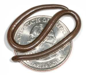 microsnake-on-coin.jpg
