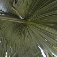 palm-sm.jpg