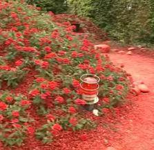red-garden-europe.jpg
