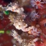 sea-horse-tiny.jpg