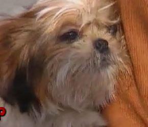 shitzou-pup-rescued.jpg