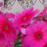 utility-meter-flowers.jpg