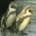 gay-penguins.jpg