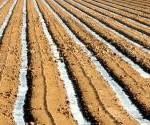 irrigation-crop