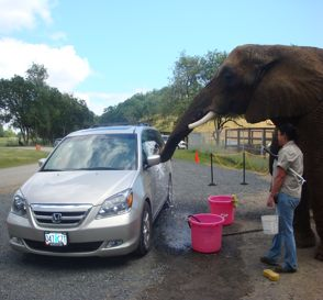 elephant-car-wash.jpg
