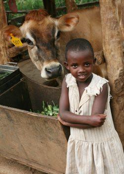 rwandan-cow-heifer-intl-geoff-oliver-bugbee.jpg