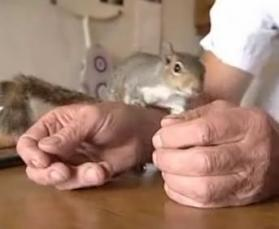 squirrel-in-human-hands.jpg