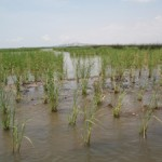 wetlands-portarthur.jpg
