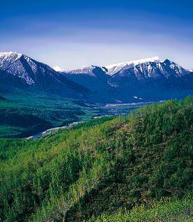boreal-forest-bc-gov.jpg