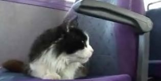 cat-commuter.jpg