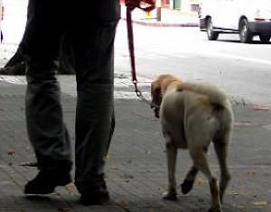 dog-walker photo by Alvimann via Morguefile