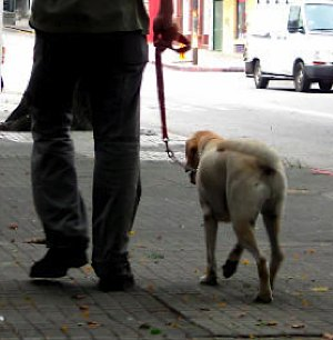 dog-walker photo by Alvimann via Morguefile