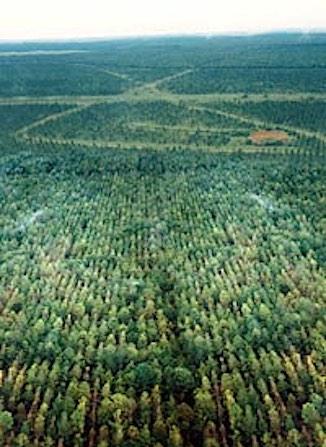 gaviotas_forest-acres-326px