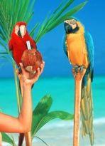 macaw-pair.jpg