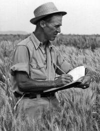 norman-borlaug-wheat.jpg