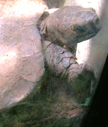 turtle-arakan-forest.jpg