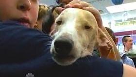 dog-teaches-kids-compassion.jpg