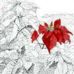 poinsettia image by Alex Cube