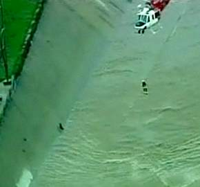 dog-rescue-calif-flood.jpg