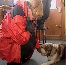 dog-rescue-in-baltic.jpg