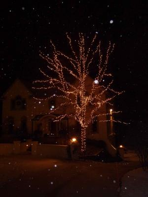 white-lights-tree-mlwk.jpg