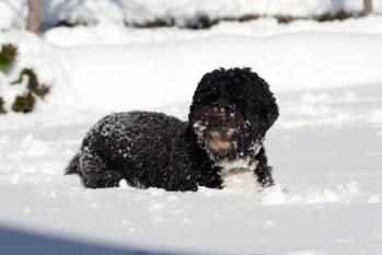 bo-in-the-snow-wh-photo.jpg