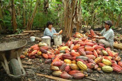 peruvian-cocoa-grower-usaid.jpg