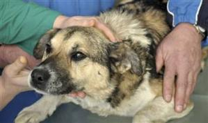 polish-rescued-dog.jpg