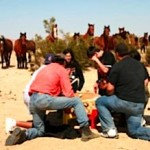 wild-horses-watch-drumming.jpg