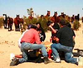 wild-horses-watch-drumming.jpg