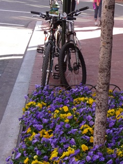 bikes-and-pansies.jpg