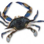 blue-crab-usfda