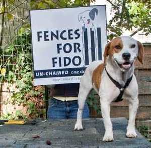fences-for-fido-charity.jpg