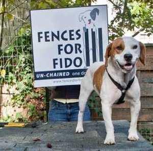 Fences For Fido photo
