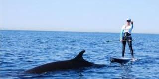 whale-joins-paddler.jpg