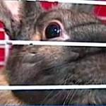 rabbit-in-cage-cu.jpg