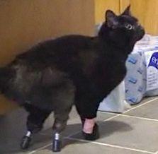 cat-peg-leg.jpg
