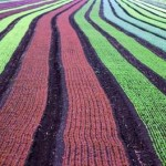 crops-planted-kconnors-morguefile