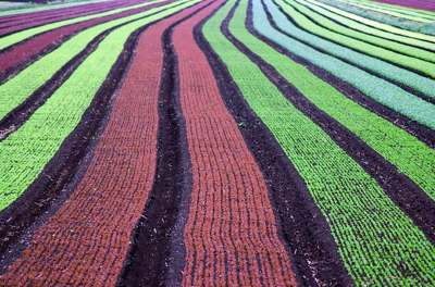 crops photo by K Connors via Morguefile