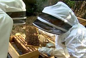 beekeepers-cnn-vid.jpg