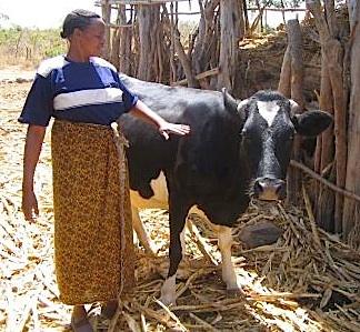 Kenya farmer, via USAID, by Bev-Abma