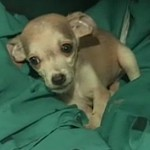 NBC video feaatures dogs adopted in Gulf since oil spill