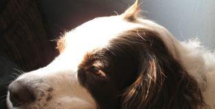 file dog photo by Geri (c) 2006